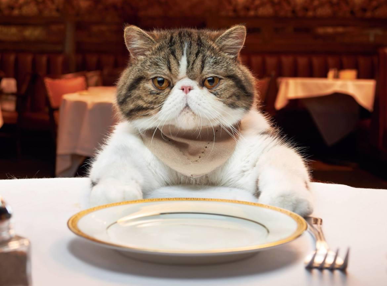 ماذا تأكل القطط